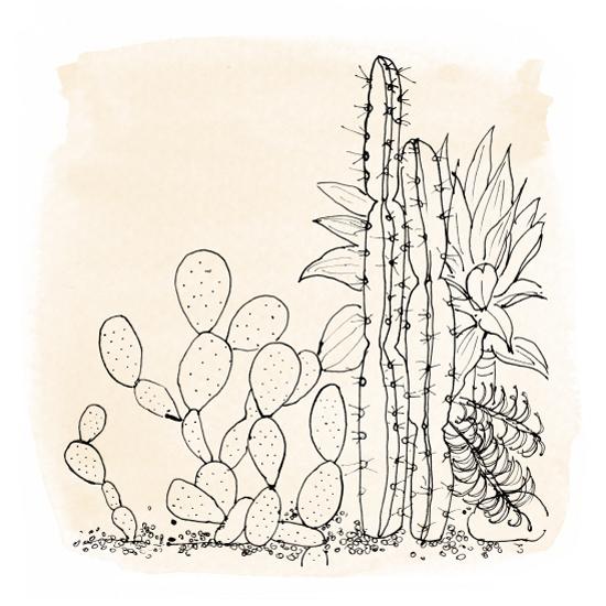 cactus-garden-2